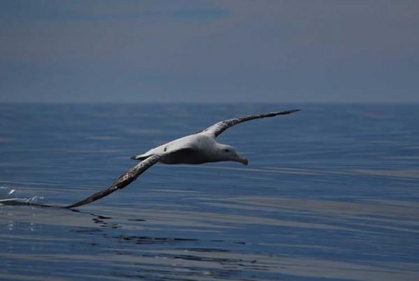 new zealand birdwatching tour