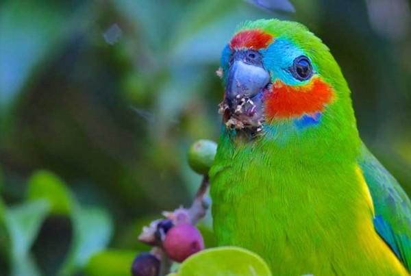 North Queensland Birdwatching Tours